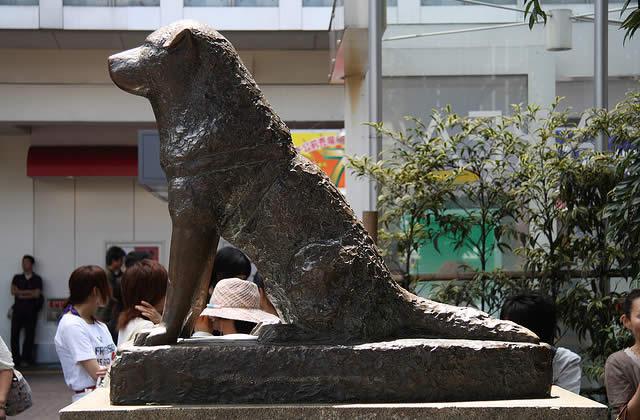 La statue de Hachiko volée à Tokyo.