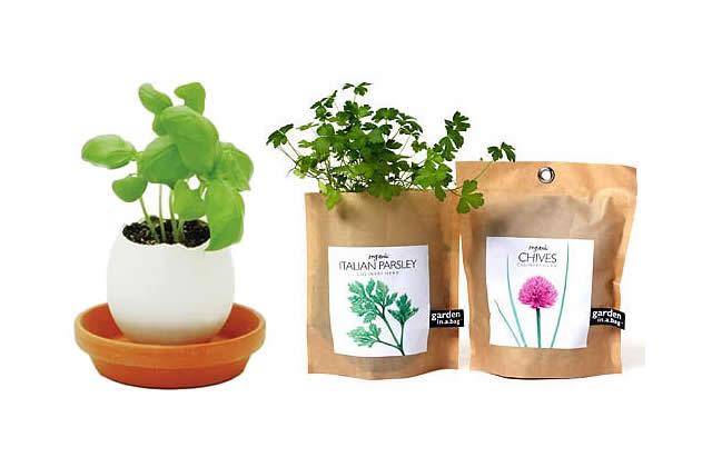 Des vases inventifs pour tes petites plantes !