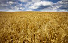 Le débat sur les OGM