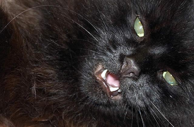 Minou, minou, minou… (le chat qui fait peur)