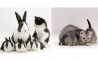 Chienchous, lapinous et miaous