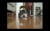Un chat + un parquet + un carton = haha.