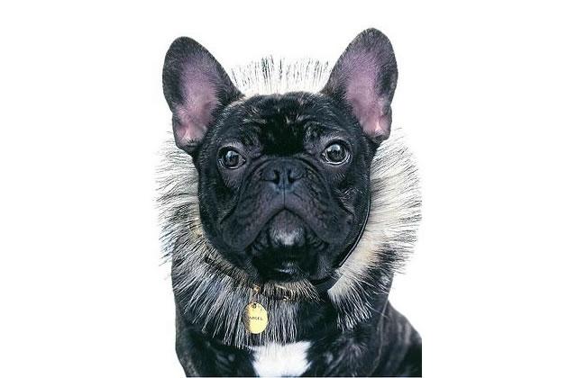 La nouvelle égérie de Nars est un chien