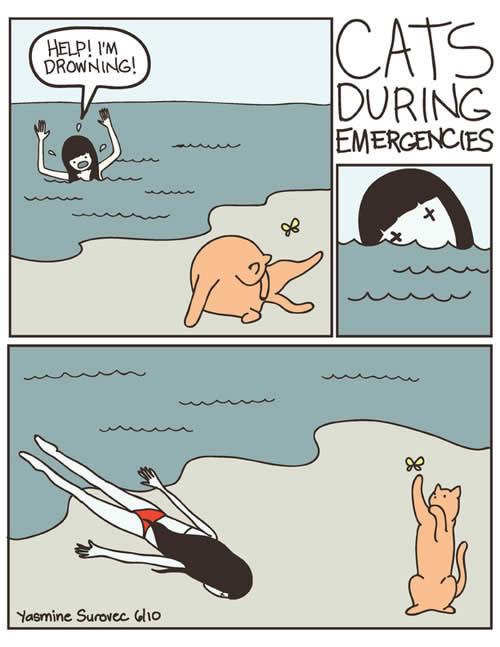 chatquisenfout 6 raisons de détester les chats