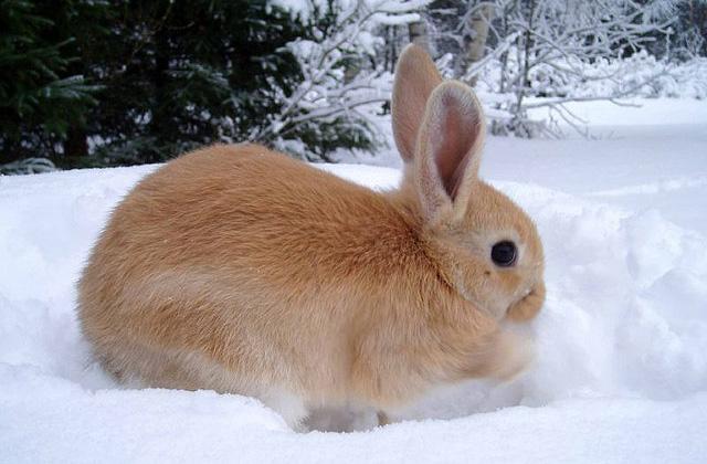 La cuniculophobie (phobie des lapins), une maladie épouvantable et non reconnue