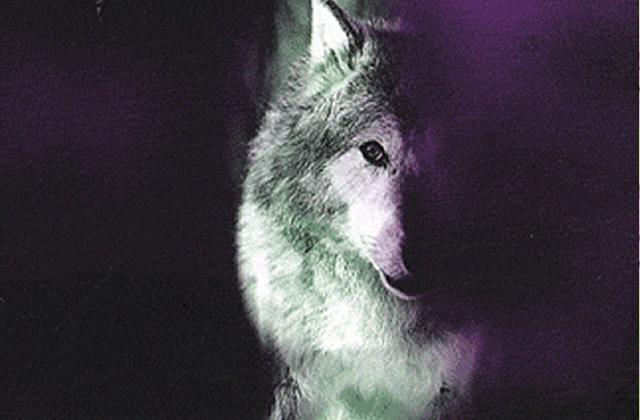 tristan egolf kornwolf