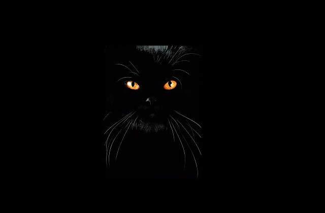 Boucheron a un chat comme égérie