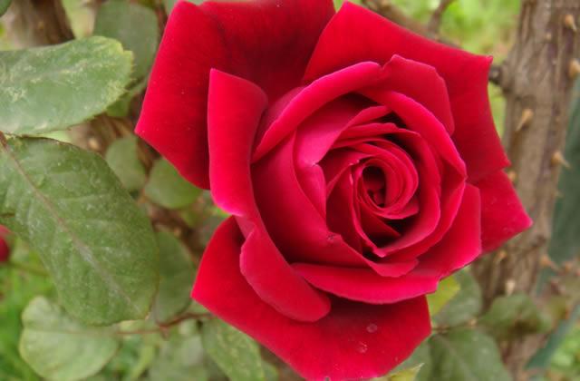 Sélection Beauté Spéciale Rose : c'est le printemps !