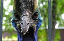 Cinq animaux avec une tête débile… mais qui peuvent quand même vous tuer