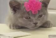 Lien permanent vers Bouygues Telecom et sa pub avec des chatons
