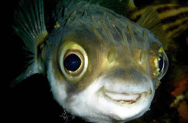 Cinq animaux avec une t te d bile mais qui peuvent quand for Poisson rouge gros yeux