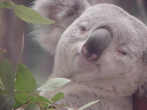 koala Les trouvailles dInternet pour bien commencer la semaine #42