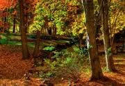 Lien permanent vers Atelier photo : La rentrée, l'automne, le changement
