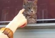 Lien permanent vers Le chaton, la vitre et le doigt de Jack