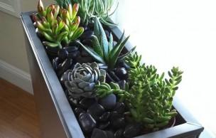 Lien permanent vers Un mini jardin d'intérieur – Tutos et conseils