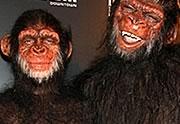 Lien permanent vers Heidi Klum revisite la Planète des singes pour Halloween