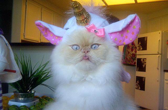 Luna the Cat, la chatte blogueuse mode