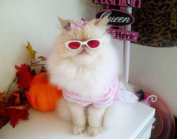 Luna the Cat, la chatte blogueuse mode lunalunettes