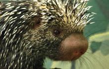 Les vidéos d'animaux de la semaine #7