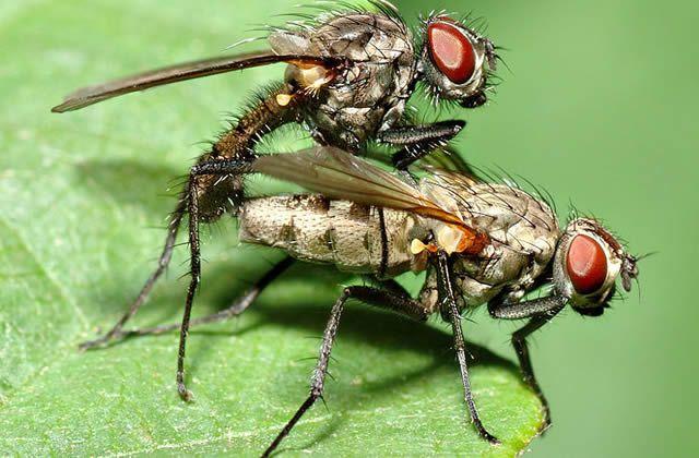 Dis Google, pourquoi les mouches…?