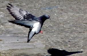 Lien permanent vers Les petits pigeonnages du quotidien