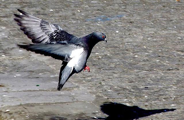 Les petits pigeonnages du quotidien