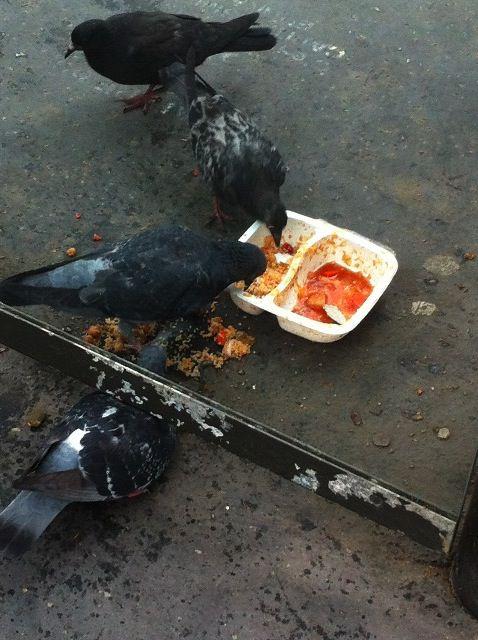 Étrangetés visuelles #1 Pigeon