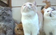 Le Cute Show : les chatons