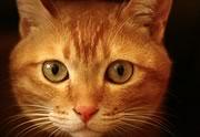 Lien permanent vers La journée internationale du chat, c'est aujourd'hui (8 août) !