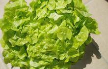 La vérité sur la salade verte
