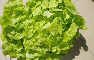 Lien permanent vers La vérité sur la salade verte