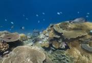 Lien permanent vers Explorez les fonds marins avec Street View Underwater !