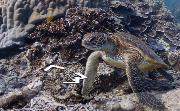 google street view underwater alphonse Explorez les fonds marins avec Street View Underwater !
