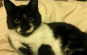 Lien permanent vers J'ai testé pour vous… adopter un chaton