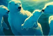 Coca-Cola x les ours polaires : le court-métrage produit par Ridley Scott