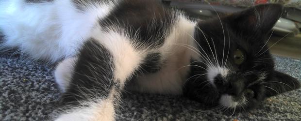 coucoutoi Jai testé pour vous... adopter un chaton