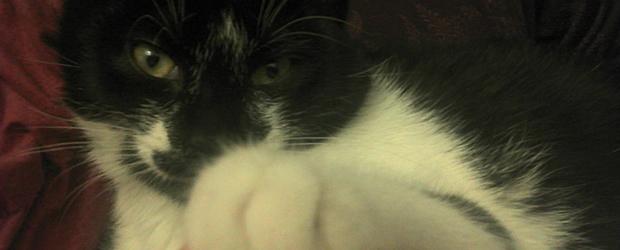 patoune Jai testé pour vous... adopter un chaton