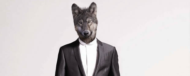 Lévolution de carrière   La petite vie (pro) dAlmira wolf boss