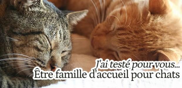 J'ai testé pour vous… être famille d'accueil pour chats