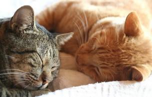 Lien permanent vers J'ai testé pour vous… être famille d'accueil pour chats