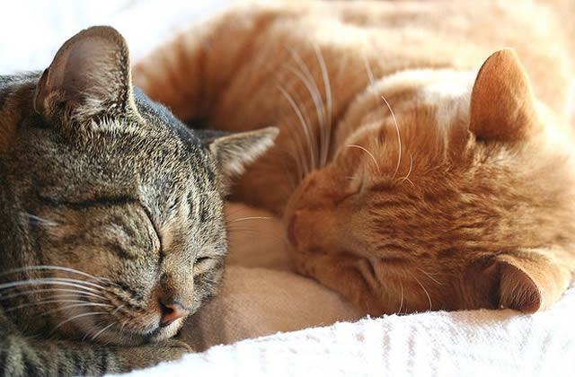 famille d 39 accueil pour chats t moignage. Black Bedroom Furniture Sets. Home Design Ideas