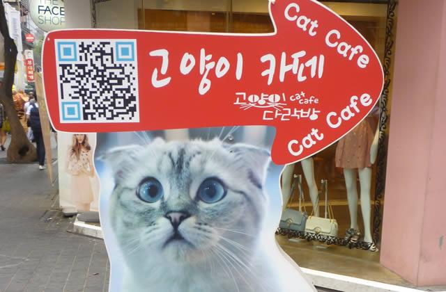 Les cafés à chats et à chiens – Carte postale de Corée du Sud