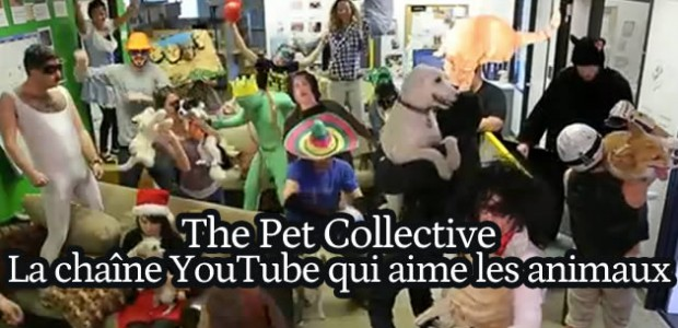 The Pet Collective, la chaîne YouTube qui aime les animaux