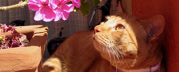 Le soleil, ça rend heureux?  chat