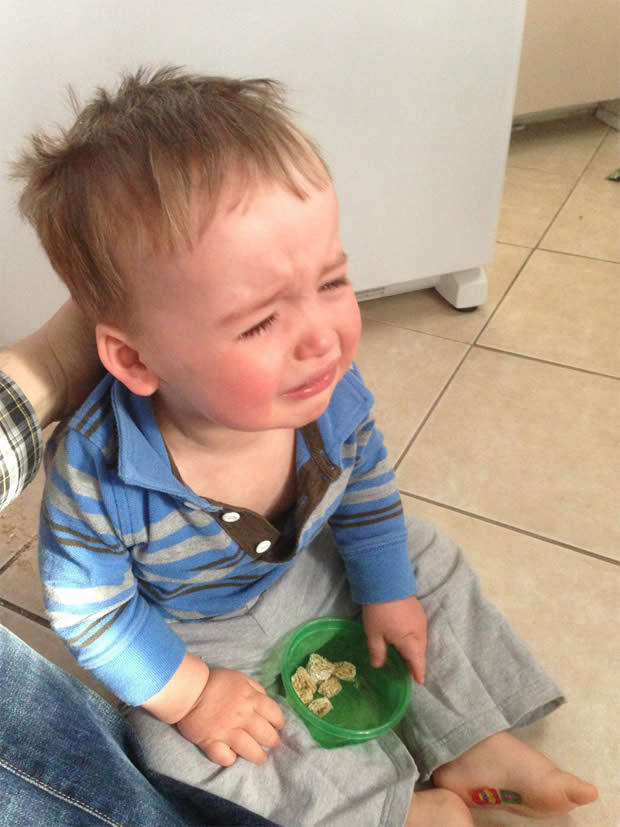 Reasons My Son is Crying   Le Tumblr du Moment  fridge