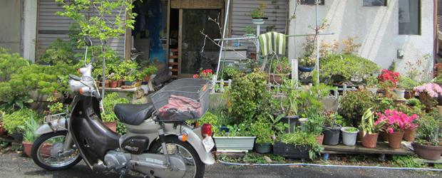 À quoi ressemble une rue japonaise ?   Carte postale du Japon jardinieres