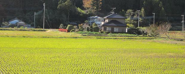À quoi ressemble une rue japonaise ?   Carte postale du Japon riziere
