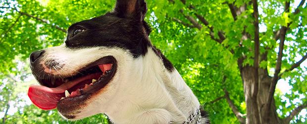 Le soleil, ça rend heureux?  summerdog