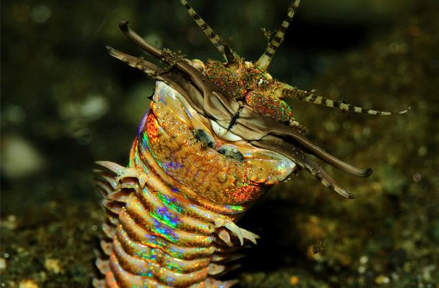 3 créatures terrifiantes des fonds marins #2