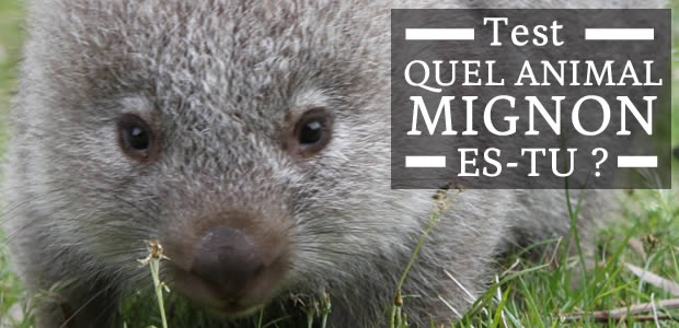 Test – Quel animal mignon es-tu ?